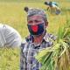 দেশে গত বছরের তুলনায় খাদ্য উৎপাদন বেড়েছে