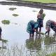 নারীরা কৃষি কাজে, ২ হাজার পরিবারে স্বচ্ছলতা