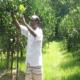 নীলফামারীতে রাসায়নিক সার ও কীটনাশক বিহীন মাল্টা চাষ