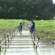 বন্যাকবলিত এলাকার কৃষি উৎপাদন বৃদ্ধিতে করণীয়