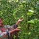 ভেড়ামারায় মাল্টাবাগান করে সফল ময়না খাতুন