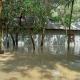 রংপুরের কাউনিয়া পয়েন্টে তিস্তার পানি বাড়ছেই