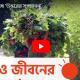 সৌন্দর্য্য ছড়াচ্ছে 'উত্তরের সুন্দরবন'
