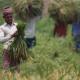'করোনাভাইরাস সংকট সত্ত্বেও বাংলাদেশের অর্থনীতি বিস্ময়কর গতিতে ঘুরে দাঁড়াচ্ছে'